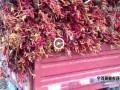 宁河辣椒明年种植面积或有缩减 ()