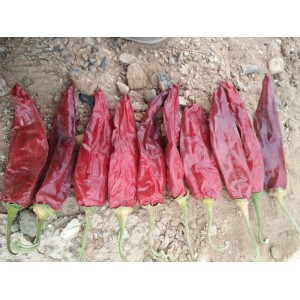 美国红板椒出售