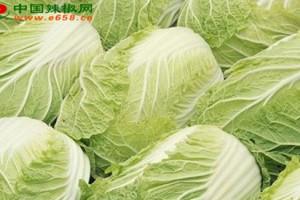 黑龙江林甸县:万亩蔬菜创…