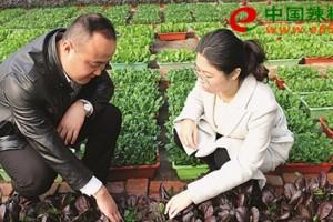 山东莱芜:盆栽蔬菜走上百…