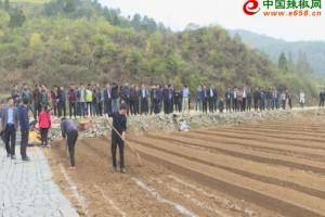 贵州安顺召开辣椒种植工作…