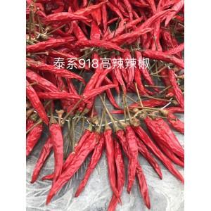 濮阳久赤农业供应各种高辣辣椒