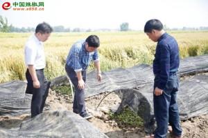 荆门市京山县推广辣椒种植…