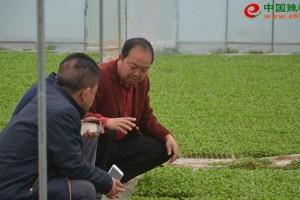 贵州瓮溪镇辣椒产业促进村…