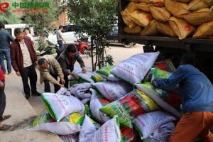 宣威市得禄乡发展辣椒产业…