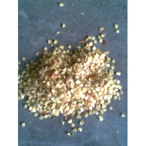大量求购辣椒籽有八毛九毛的来