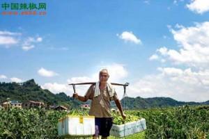 怀化:辣椒订单种植种出新…