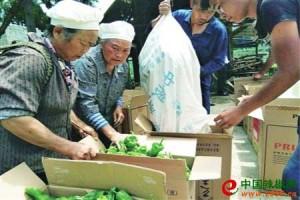 贵阳辣椒订单模式助农增收