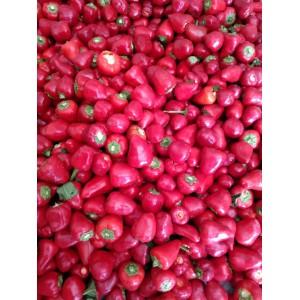 本人供应大量草莓椒,小米辣