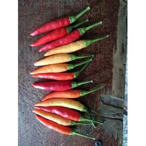 本人供应大量草莓椒,小米辣,辣椒王。