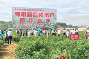 2018年贵州辣椒种植面积达500多万亩 ()