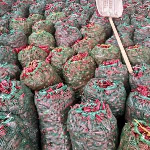 大量销售北京红