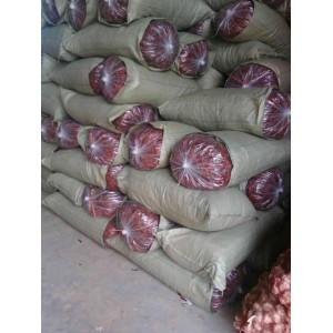 长期供应金乡各种规格三英系列辣椒