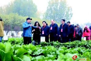秋季蔬菜品种展示会在济南…