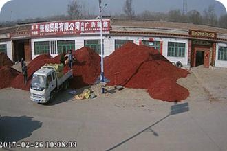 德州振军辣椒贸易公司