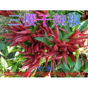 河南开封通许三樱干辣椒主产区