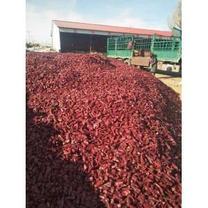 北京红干椒大量出货