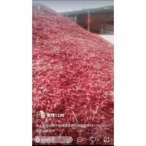 大量北京红