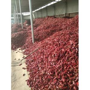 本人大量供应北京红干辣椒