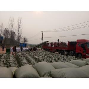 河南开封通许三樱椒主产区