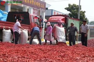 小辣椒 大产业 ()