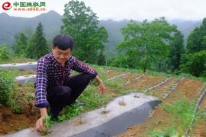 酉阳稳步推进 把辣椒产业做…