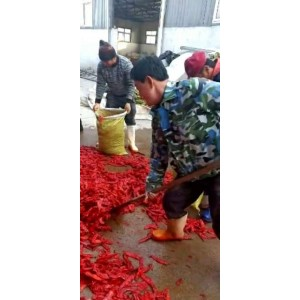 宁河津红软皮腌制辣椒出售