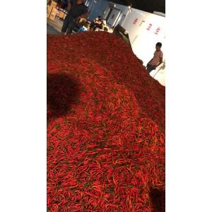 本公司有大量朝天椒,米椒出售