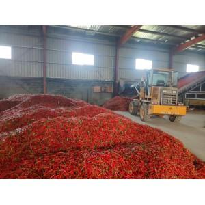 烘干加工厂大量收购带把高辣鲜朝天椒