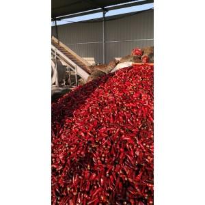 大量供应北京红(可打酱剁椒)