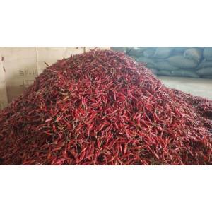 大量收购带把干辣椒,天宇、816、819、918、艳椒、圣椒