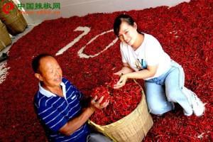 慈利:火红的辣椒 火热的日子 ()