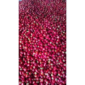 本人大量供应新鲜草莓椒、小米辣、三樱辣椒