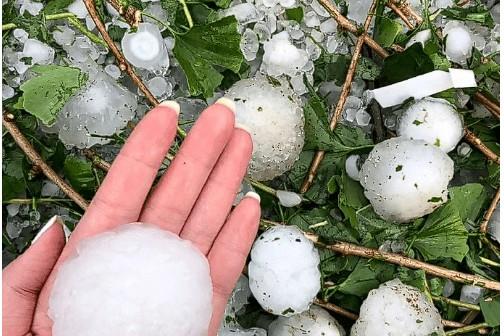 河北罕见冰雹来袭,椒农受损严重 ()