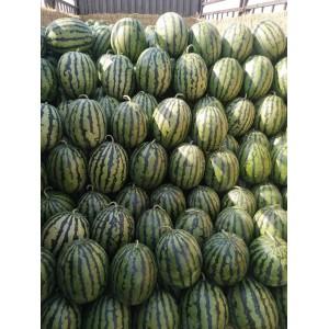 安生金品甜王,西瓜种子