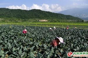 陕西太白:蔬菜产区助民脱…