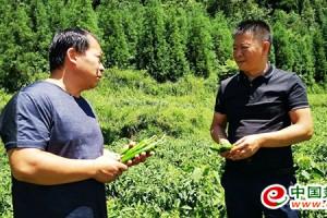 乐平青峰:力求农户发家致富 ()