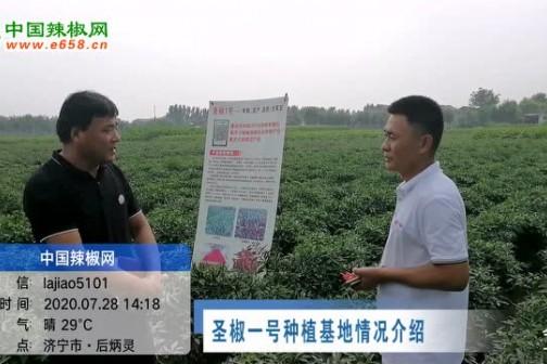 2020年7月中国辣椒网产区调研-高辣辣椒篇 ()