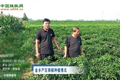 2020年7月中国辣椒网产区调研-面积篇 ()