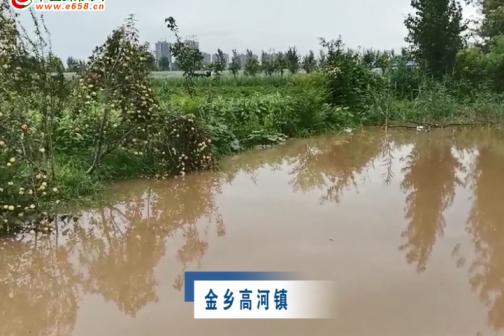 8月6号金乡辣椒产区强降雨受灾情况(一) ()