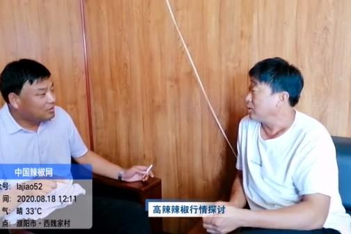 2020年8月河南辣椒产区调研--高辣辣椒行情探讨 ()