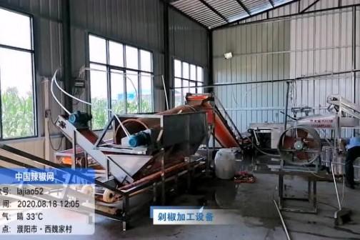 2020年8月河南辣椒产区调研--剁椒加工设备 ()