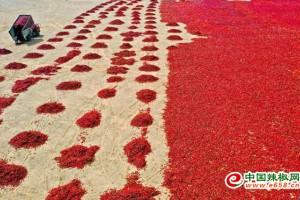 张掖:红辣椒鼓起钱袋子