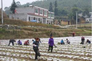 做强做优蔬菜产业 助推乡村…