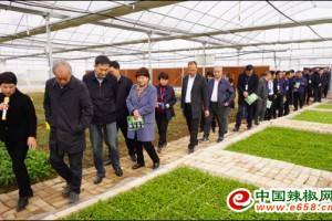 贵州省黄平县野生蔬菜基地…