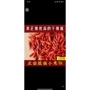 大量收购越南小米椒  红宝石4号一代种子