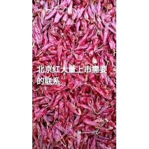 北京红辣椒二斤条辣椒干度十成干价格便宜