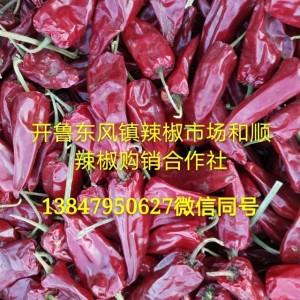 内蒙开鲁北京红干椒千金红。各种花皮