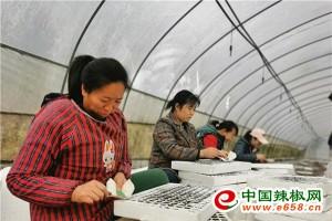 遵义道真:强化辣椒优势产业