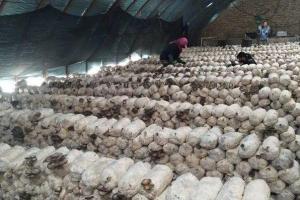 肃北:蔬菜大棚成致富新路子
